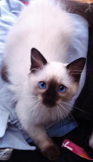 Azureys Cats -