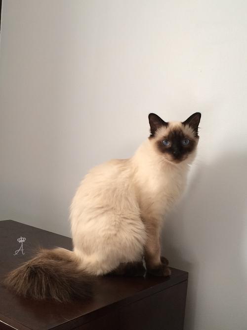 Azureys Cats - Mei-Xiu